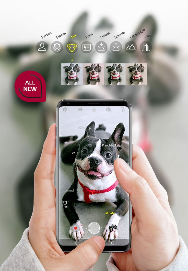 Boston Terrier Dog and Hearts Pattern 3 in 1 Multi-Purpose Retractable Fast Charger Cable,for Android,Tpye-C,Etc
